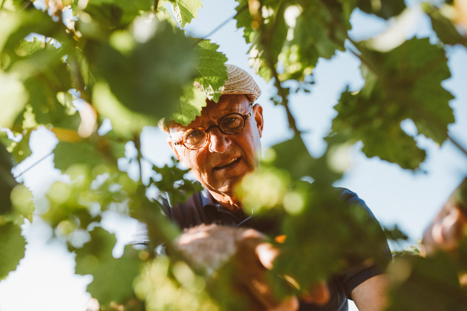 Steffen-Montigny-nachhaltiger-Weinbau