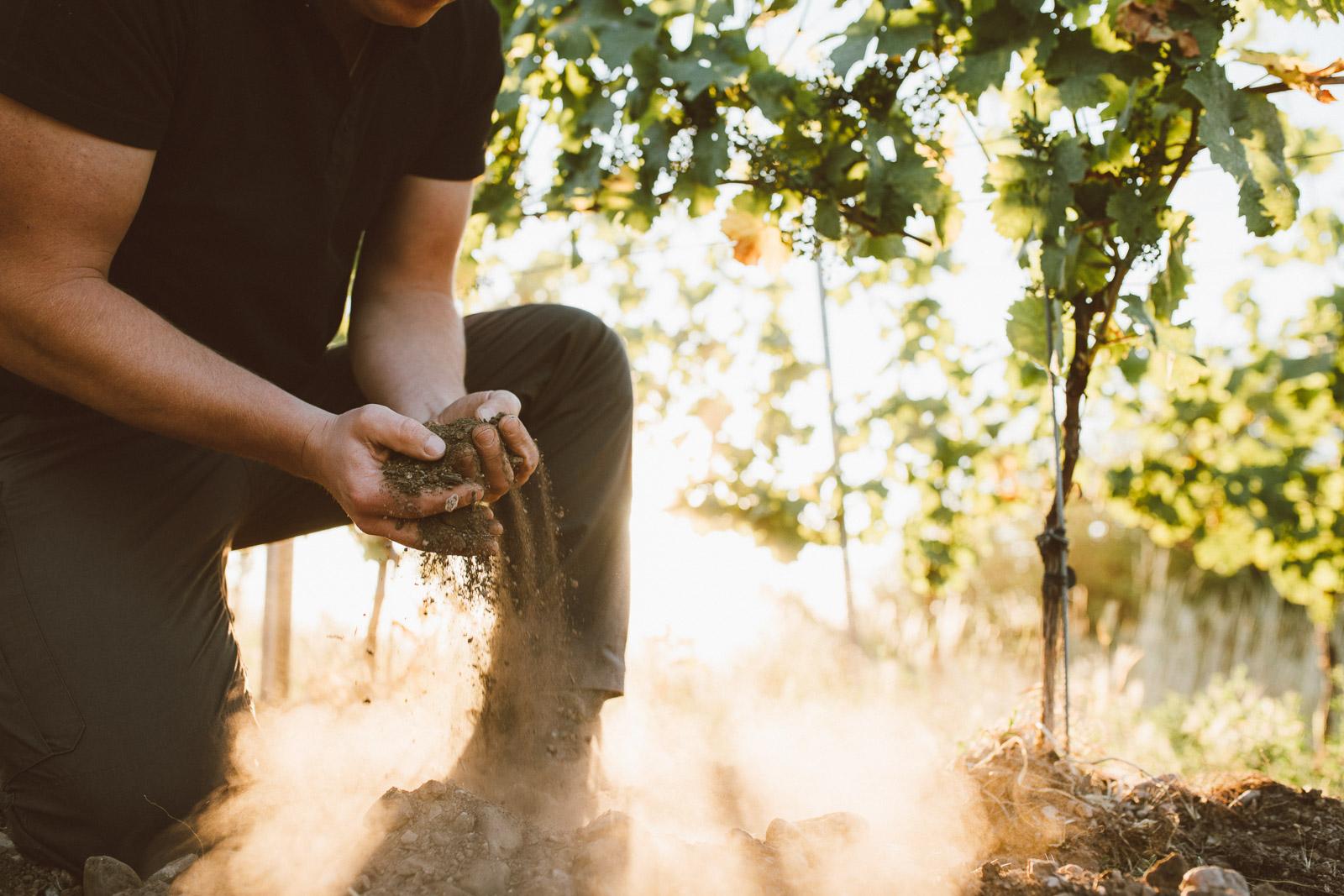 Biodynamischer-Weinbau-Deutschland