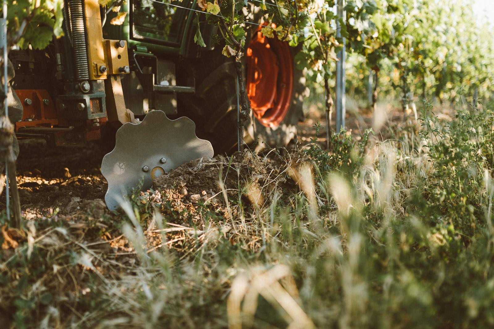 Biologische-Weinwirtschaft-an-der-Nahe